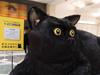 (映像で見る)広島駅に「巨大クロネコ」出現